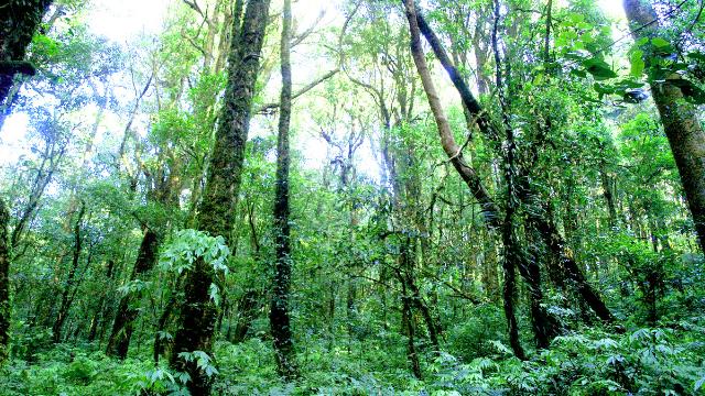 יערות הגשם - הרס ושימור