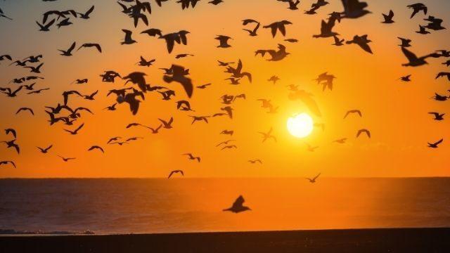אקולוגיה של החי והצומח בעולם - על נדידה, התלהקות ומנגנוני הישרדות בטבע