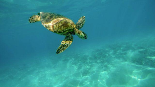 איי גלפגוס - על איים מכושפים, דארווין ותורת אבולוציה